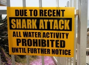 shark attacks on local beaches