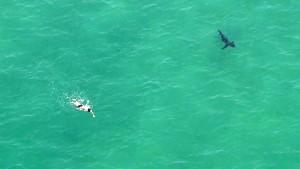 guy racing a shark